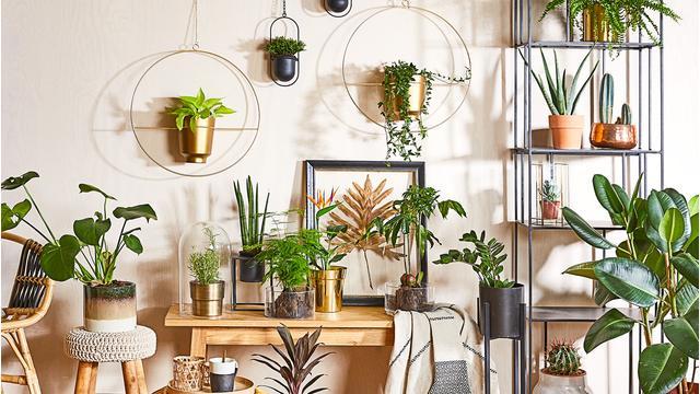 Style-Guide: Zimmer-Dschungel